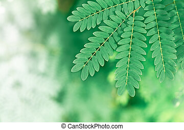 Natural green leaves using as background blur