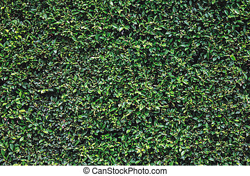 Natural green leaves wall texture background
