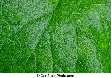 natural green texture from a piece of wet plant leaf