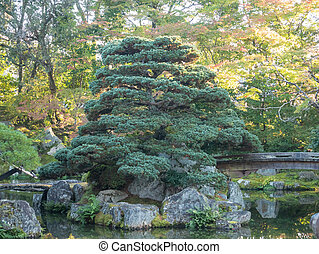 Natural green trees in a Japanese garden