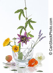 Natural herb and flower selection for herbal medicine