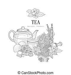 Natural Herbal Tea Ingredients Hand Drawn Realistic Sketch
