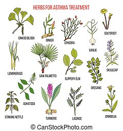 Natural herbs collection for asthma treatment. Hand drawn botanical vector illustration