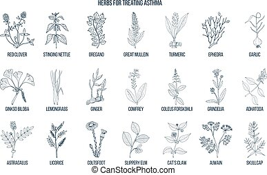Natural herbs collection for asthma treating. Hand drawn...