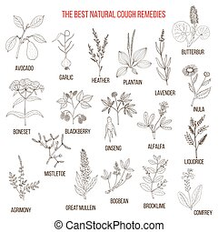 Natural herbs for cough remedies. Hand drawn botanical...