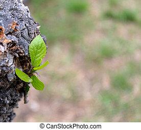 natural, hojas, fondos, con, belleza, bokeh.