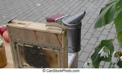 natural honey bee comb