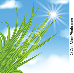 Natural illuminated background with green grass