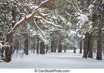 natural, inverno, nevado, nature., time., árvores, natal, forest., experiência., holidays., gelado, ano, novo, xmas, vista