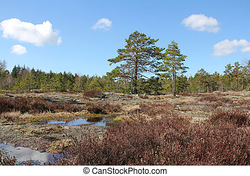 Natural landscape of rocks, pine trees and heather in Teijo, Finland May 2012.