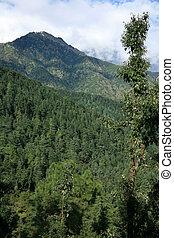 Trekking from Mcleod Ganj towards Dal Lake, India
