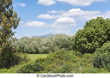 Natural landscape, valley