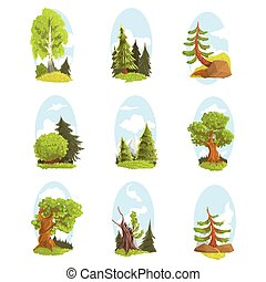 Natural landscape with various trees set. Coniferous and...