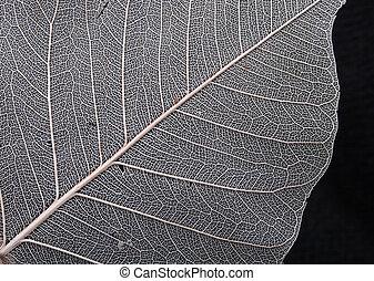 natural leaf background (macro) on the black background