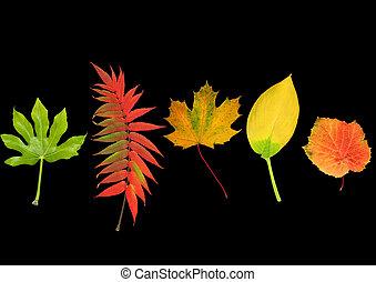 Natural Leaf Beauty