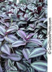 Natural leaf flower background captured from nature