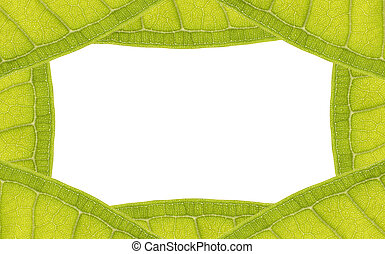 natural leaf frame with space for text on white