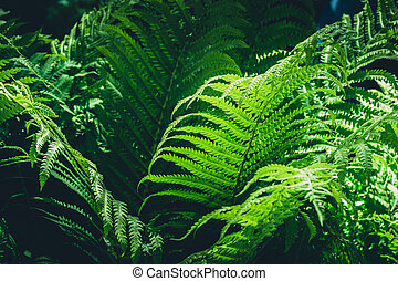 Natural leafs of fern in tropical forest. Closeup. Nature background.