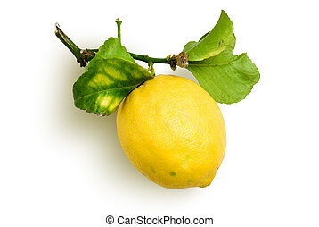 natural lemon - lemon with spray and leafs from organic...
