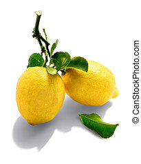 natural lemons - lemons with spray and leafs from organic ...