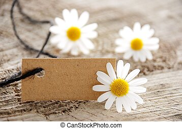 a natural looking banner with copy space and white blossoms as background