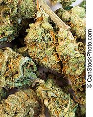 natural, marijuana, flores, cannibis, verde, quebrada, ...