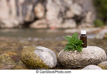 Natural Mint Essential Oil in a Glass Bottle with Fresh.