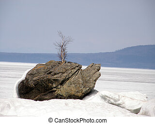 a rock Turtle on the lake Baikal.