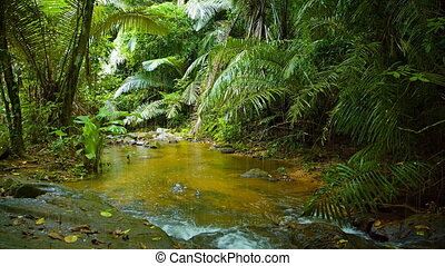 Natural mountain stream, flowing through tropical rainforest.
