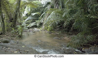 Natural mountain stream, flowing through a tropical rainforest. 1080p footage