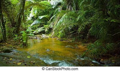 Natural mountain stream, flowing through tropical rainforest.