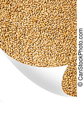 Natural oat grains background, clos