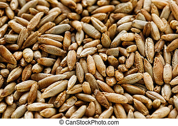 Natural oat grains background, closeup. vegetarian food