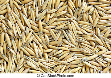 Natural oat grains
