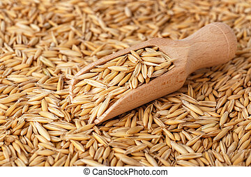 natural oat grains with husk