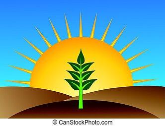 Natural Organic Farming - Sprouting