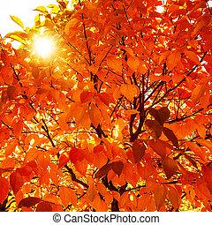 natural, otoño, plano de fondo