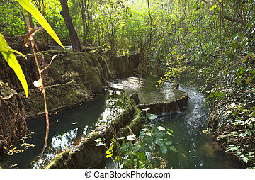 Natural pools in tropical rainforest in Chiapas, Mexico