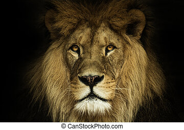 Natural portrait lion