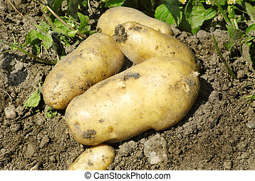 natural potatoes