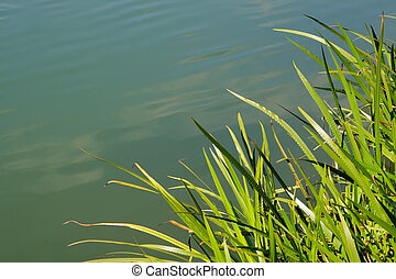 Grassy reeds forming a natural frame on a background of water