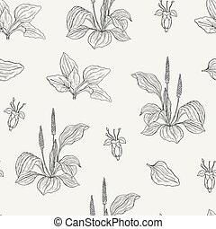 Natural seamless pattern with flowering plantains. Medicinal herbaceous plant with flowers and leaves hand drawn with contour lines. Monochrome vector illustration for textile print, wrapping paper.