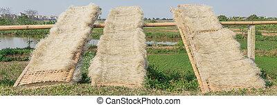 natural, secado, cercas, bambú, manera, vietnamita, seco, fideos, arroz, luz del sol, afuera