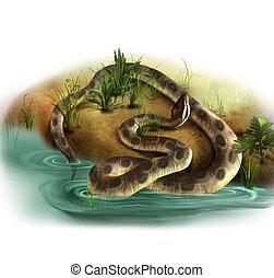 natural, serpiente, marrón, inmenso, pitón, agua, habitat, boa