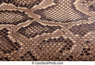 Natural skin of a python 2