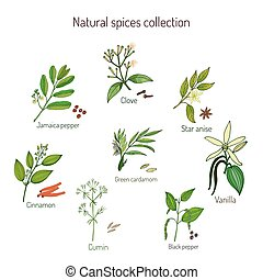 Natural spices collection