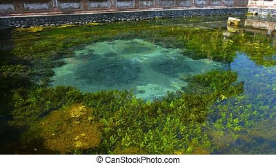 Natural mineral water rolls from the depths of a source spring inside Tirta Empul Hindu Water Temple in Bali, Indonesia, with water plants thriving in the pool. Video UltraHD