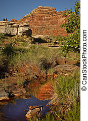 Natural Spring Oasis in the Utah De - A pool fed by a ...