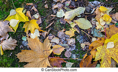 Natural still life, autumn leaves with moss