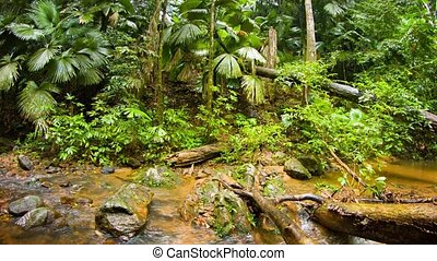 Water flows along the rocky course of a jungle stream on a rainy day, with tropical vegetation, with sound.